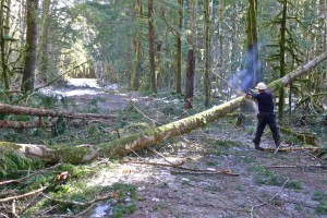 A Northwest Wilderness group clears blow down before the Dingford gate