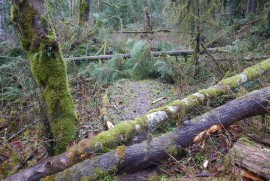 Granite Creek blowdown near the trailhead