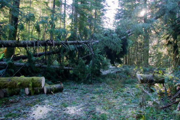 20151125RoadClearing