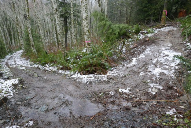 The new trail currently leaves the old logging road about .3 miles from the main road
